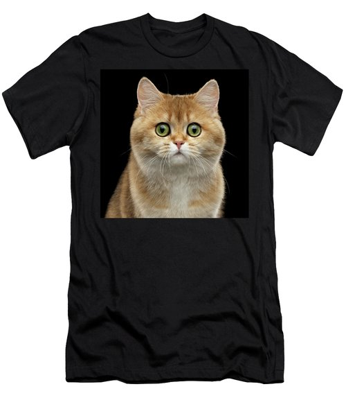 Close-up Portrait Of Golden British Cat With Green Eyes Men's T-Shirt (Athletic Fit)