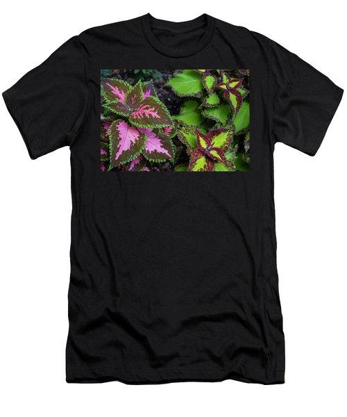 Colorific Coleus Men's T-Shirt (Athletic Fit)