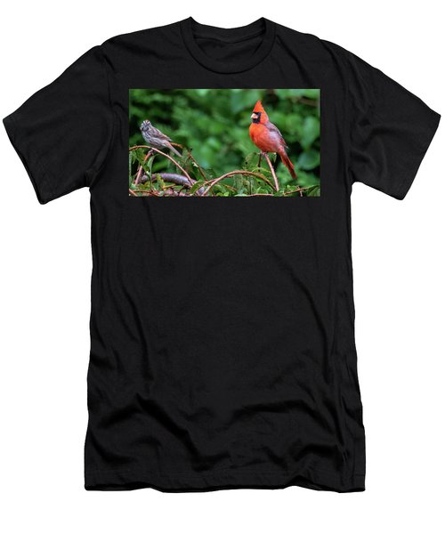 Envy - Northern Cardinal Regal Men's T-Shirt (Athletic Fit)