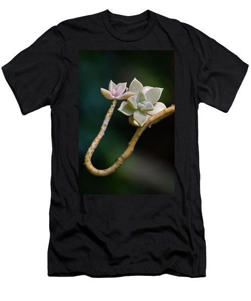Men's T-Shirt (Athletic Fit) featuring the photograph Ghost Plant Succulent by Dale Kincaid