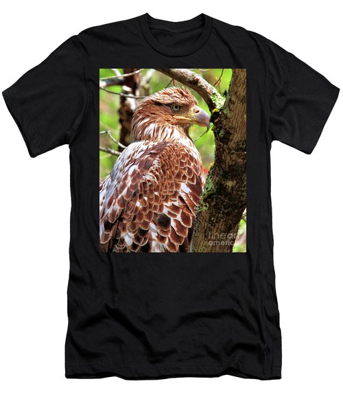 Immature Eagle Men's T-Shirt (Athletic Fit)