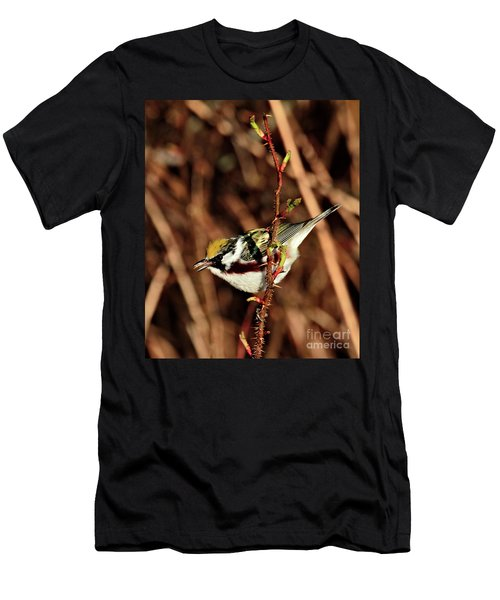 Perky Little Warbler Men's T-Shirt (Athletic Fit)