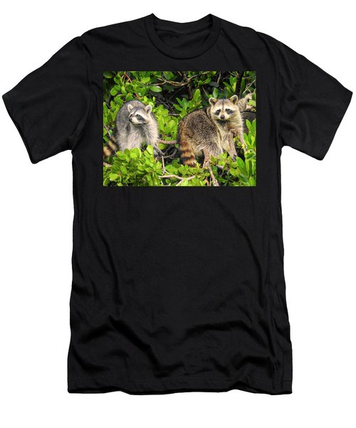 Raccoons In The Mangroves Men's T-Shirt (Athletic Fit)