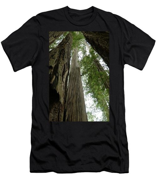 Stand Of Old Grwoths Men's T-Shirt (Athletic Fit)
