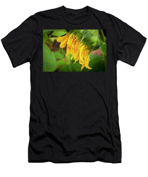 Sunflowers  Helianthus 034 Men's T-Shirt (Athletic Fit)