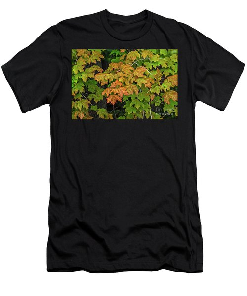 Various Stages Of Fall Color On Maple Leaves Men's T-Shirt (Athletic Fit)