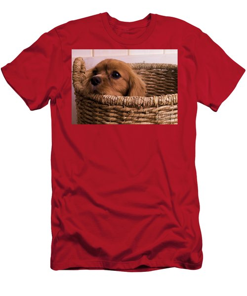 Cavalier King Charles Spaniel Puppy In Basket Men's T-Shirt (Athletic Fit)