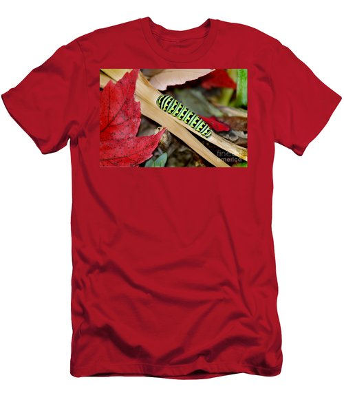 Black Swallowtail Butterfly Caterpillar Men's T-Shirt (Athletic Fit)