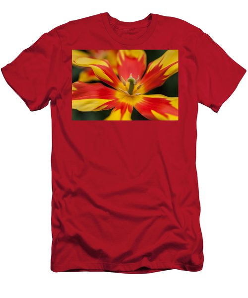 Dappled Tulip 1. The Tulips Of Holland Men's T-Shirt (Athletic Fit)