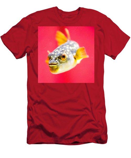 Funny Fish Men's T-Shirt (Athletic Fit)
