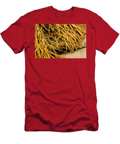 Yellow Kelp Men's T-Shirt (Athletic Fit)