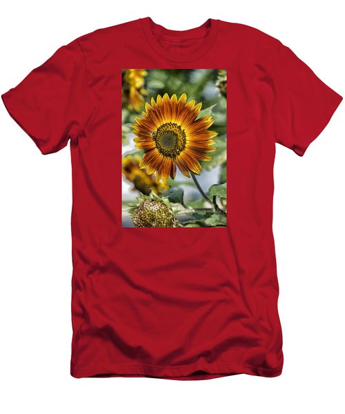 End Of Sunflower Season Men's T-Shirt (Athletic Fit)