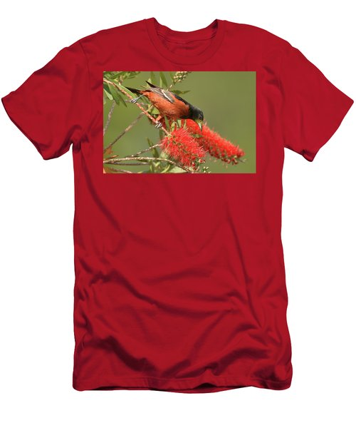 Orchard Oriole  Men's T-Shirt (Slim Fit) by Alan Lenk