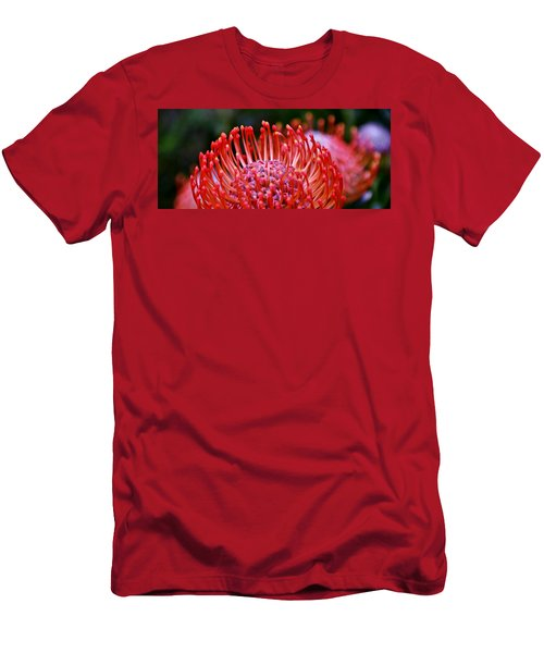 Red  Pincushion Protea Men's T-Shirt (Slim Fit) by Werner Lehmann