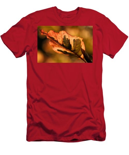 Tri-color Beech In Autumn Men's T-Shirt (Athletic Fit)