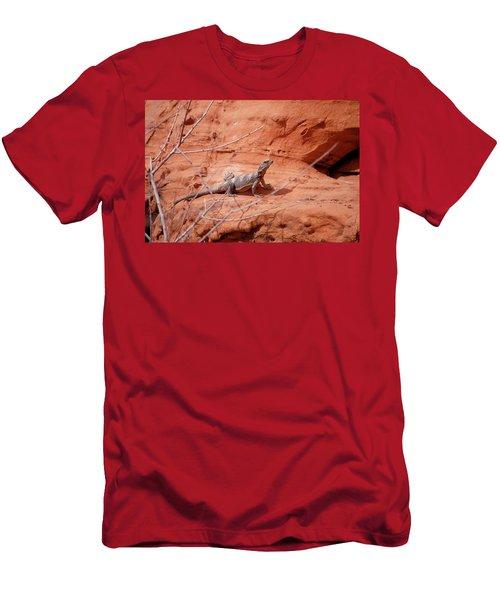 Chuckwalla, Sauromalus Ater Men's T-Shirt (Athletic Fit)