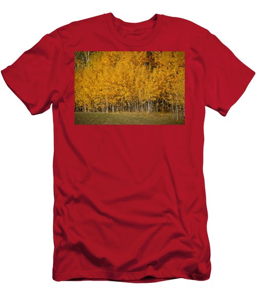 A Stand Of Aspen Men's T-Shirt (Athletic Fit)