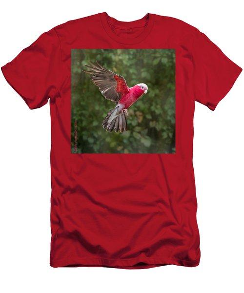Australian Galah Parrot In Flight Men's T-Shirt (Athletic Fit)