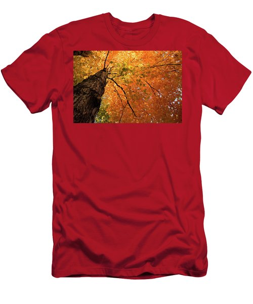 Autumn Canopy In Maine Men's T-Shirt (Athletic Fit)
