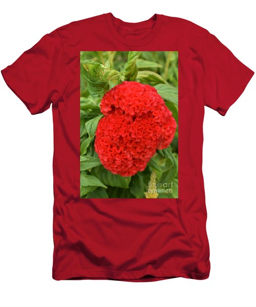 Bright Red Cockscomb Men's T-Shirt (Athletic Fit)