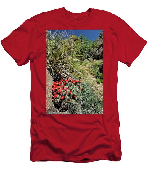Crimson Barrel Cactus Men's T-Shirt (Athletic Fit)
