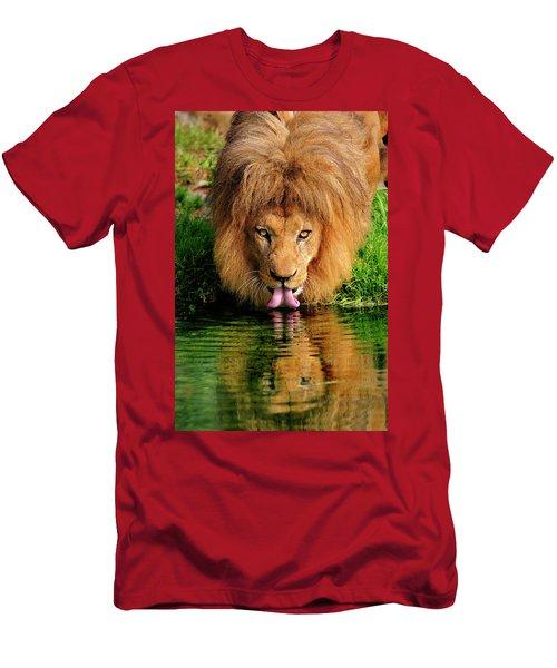 Christmas Lion Men's T-Shirt (Athletic Fit)