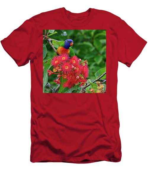 Lorikeet And Gum Nut Blossoms By Kaye Menner Men's T-Shirt (Athletic Fit)