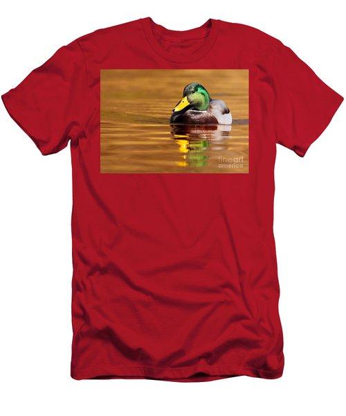 Mallard Drake In The Golden Water Men's T-Shirt (Athletic Fit)