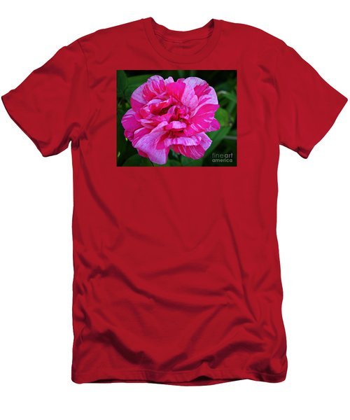 Pink Candy Stripe Rose Men's T-Shirt (Athletic Fit)