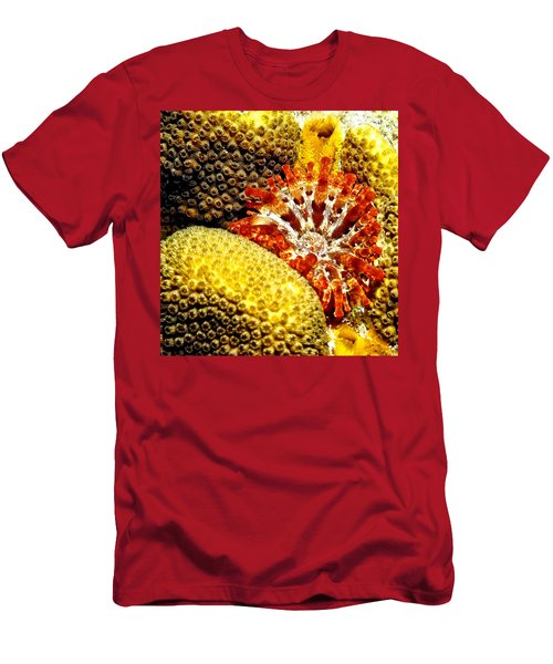 Rare Orange Tipped Corallimorph - Fire In The Sea Men's T-Shirt (Athletic Fit)