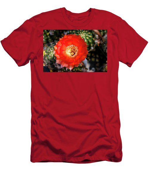 Red Cactus Bloom Men's T-Shirt (Athletic Fit)