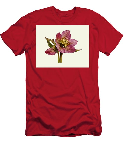 Red Hellebore Cream Background Men's T-Shirt (Slim Fit) by Paul Gulliver