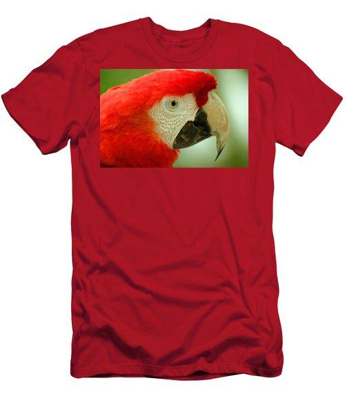 Scarlett Macaw South America Men's T-Shirt (Slim Fit) by Ralph A  Ledergerber-Photography