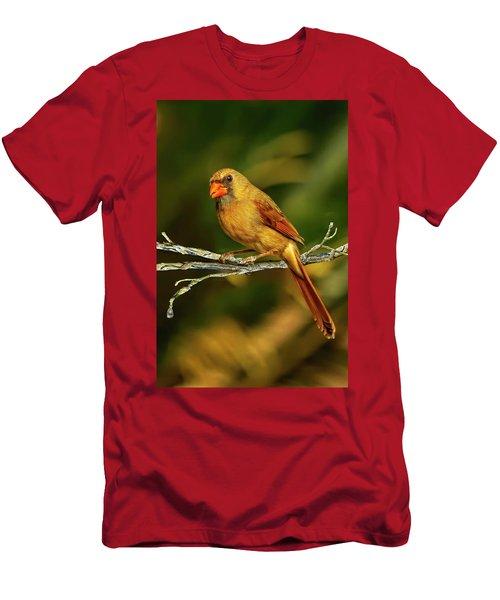 The Female Cardinal Men's T-Shirt (Athletic Fit)
