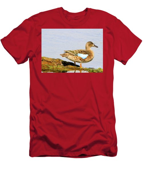Blue-winged Teal Female Duck Men's T-Shirt (Athletic Fit)