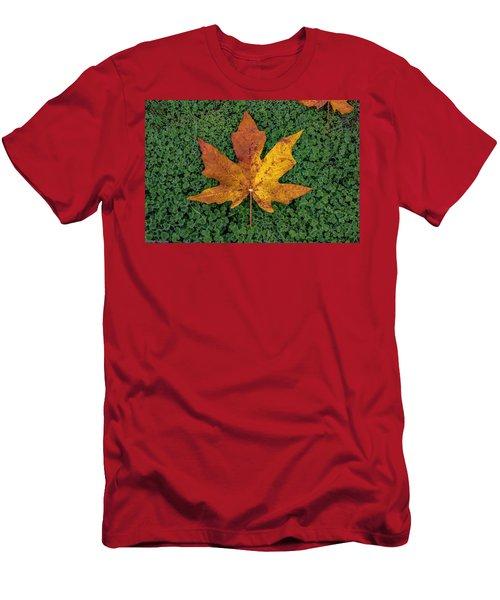 Clover Leaf Autumn Men's T-Shirt (Athletic Fit)