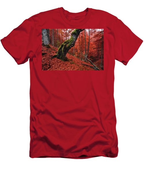 Old Beech Tree Men's T-Shirt (Athletic Fit)