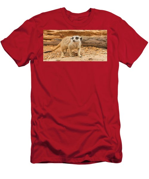 One Meerkat Looking Around. Men's T-Shirt (Athletic Fit)