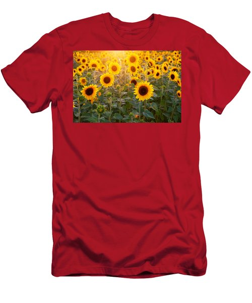 Sunflowers Field Men's T-Shirt (Athletic Fit)