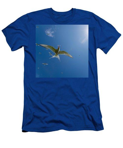 Arctic Terns Sterna Paradisaea, Flatey Men's T-Shirt (Athletic Fit)