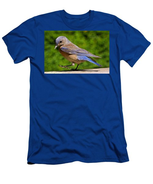 Dancing Western Bluebird  Men's T-Shirt (Athletic Fit)