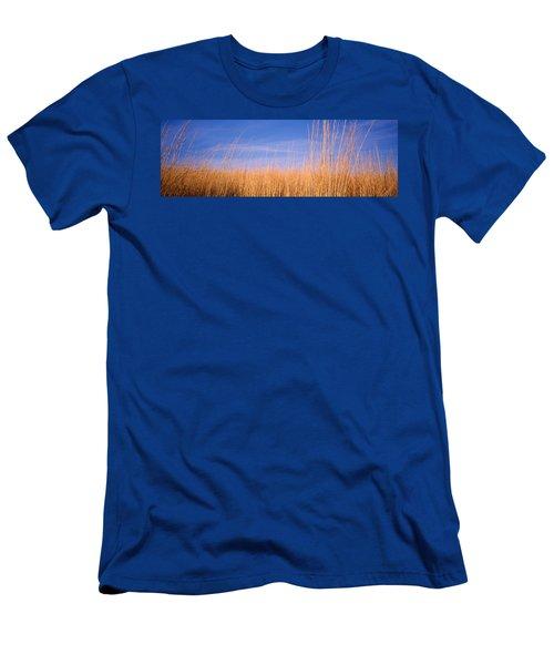 Prairie Grass, Blue Sky, Marion County Men's T-Shirt (Athletic Fit)