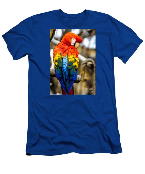 Preening Scarlet Macaw Men's T-Shirt (Athletic Fit)