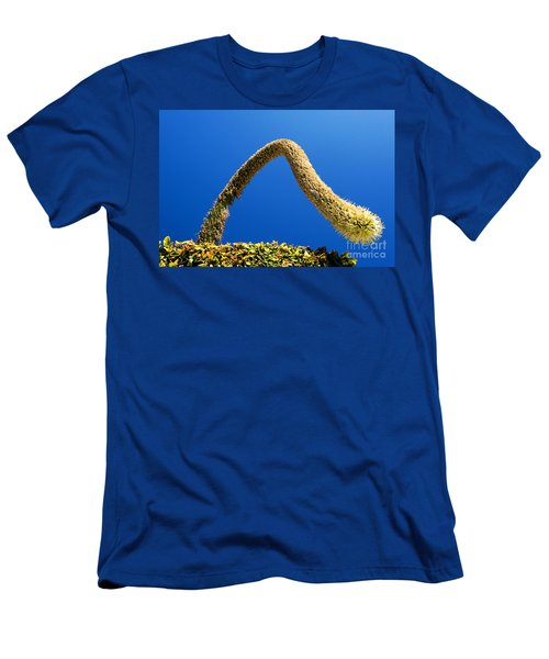 Strange Plant Under Blue Sky Men's T-Shirt (Athletic Fit)