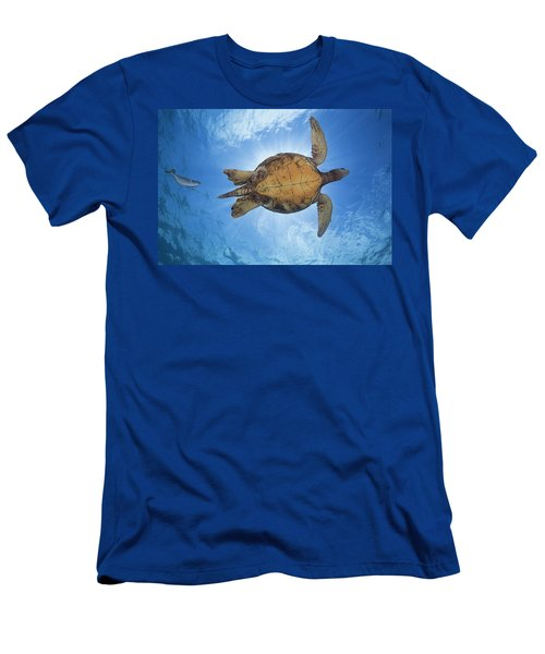 This Male Green Sea Turtle  Chelonia Men's T-Shirt (Athletic Fit)