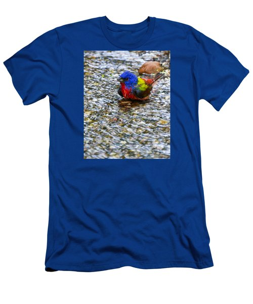 Da223 Painted Bunting Bathtime Daniel Adams Men's T-Shirt (Athletic Fit)