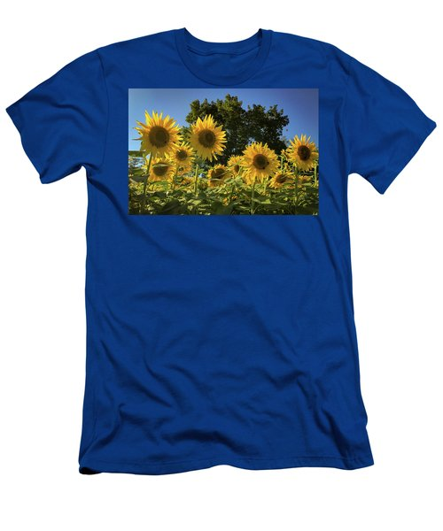 Sunlit Sunflowers Men's T-Shirt (Athletic Fit)