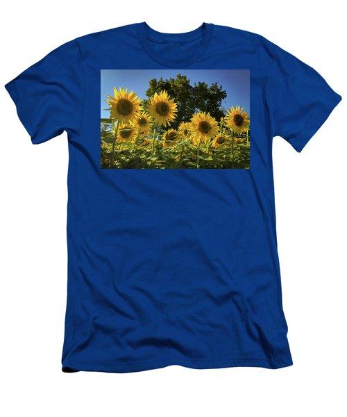 Sunlit Sunflowers Men's T-Shirt (Athletic Fit)