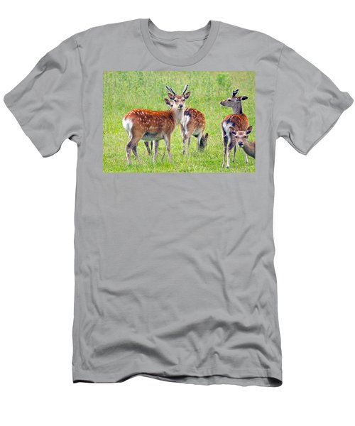 Fallow Deer Men's T-Shirt (Athletic Fit)