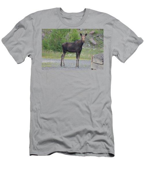 Moose Men's T-Shirt (Slim Fit) by James Petersen